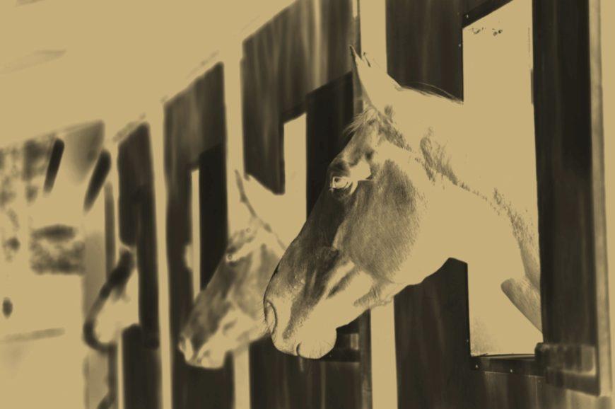 Air Pollution Slows Horse Races